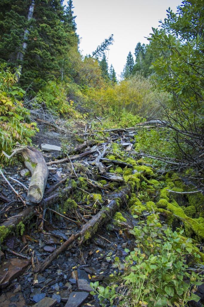 mossy timp trail