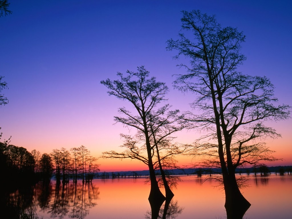 Cypress-Trees