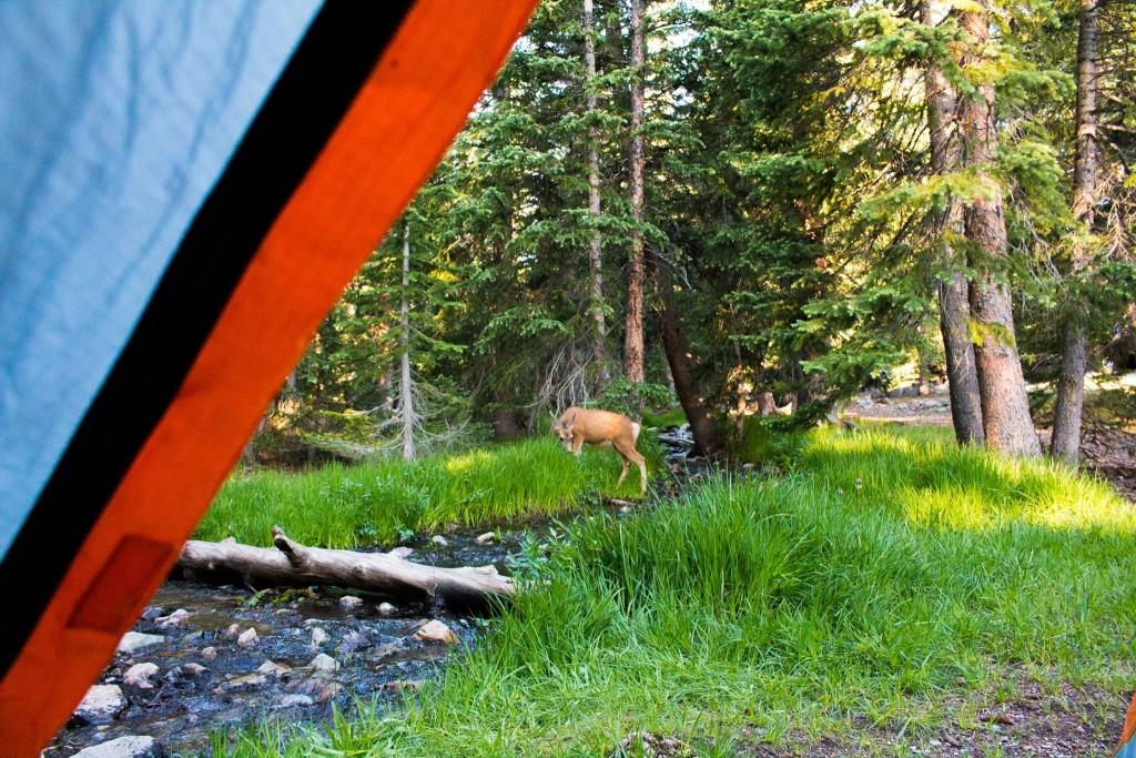 Wheeler Peak Camping