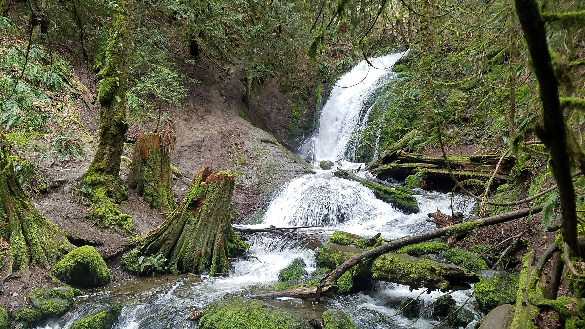 coal creek falls, Cougar Mountain Regional Wildlife Park, issaquah, issquah hiking, bellevue trails