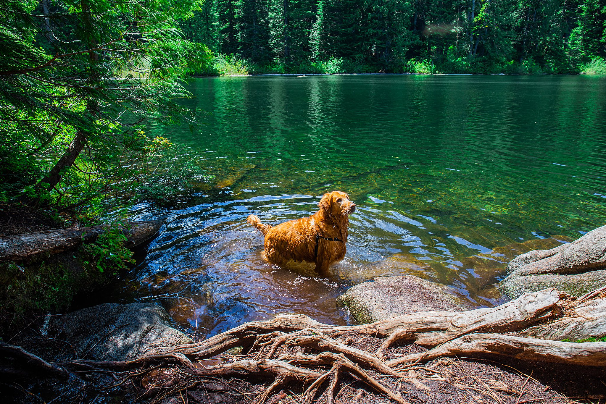 talapus lake, olallie lake, washington, north bend, hiking, 52 hike challenge